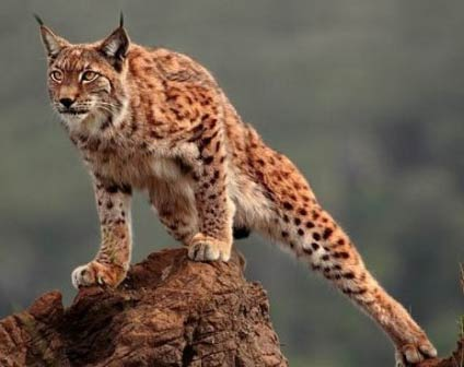 adapter plan a problematique esprit de lynx