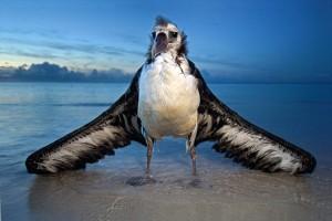 l'albatros, Baudelaire - commentaire composé