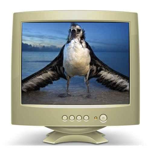 L'albatros Baudelaire : analyse en vidéo