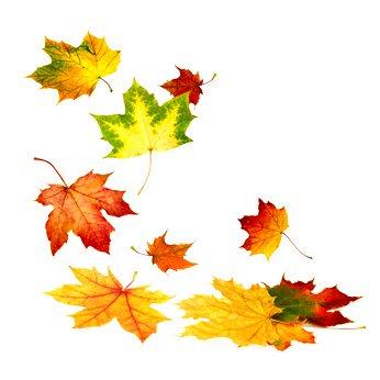 verlaine chanson d'automne