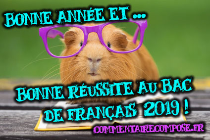 voeux 2019 commentairecompose.fr
